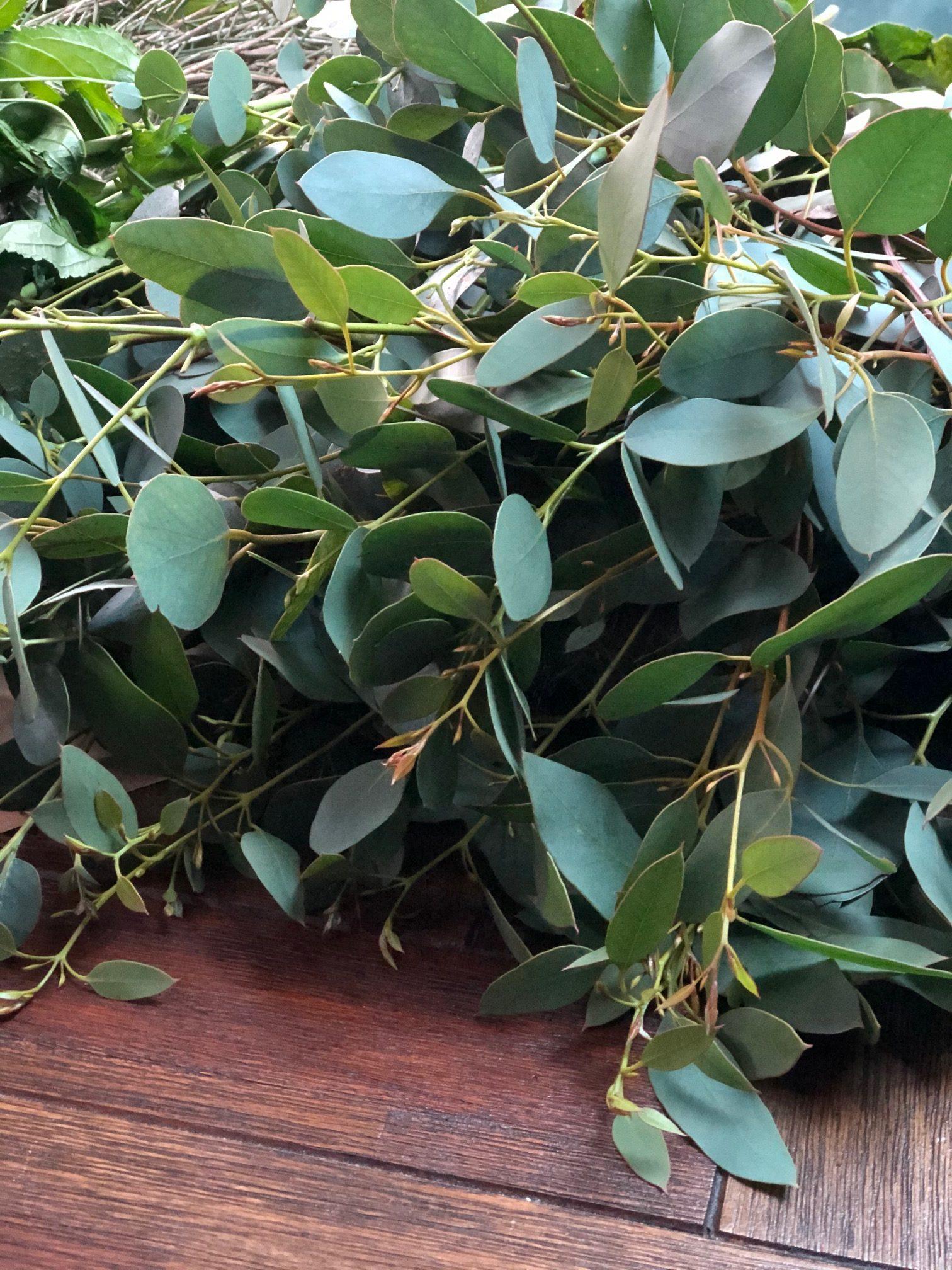 Irish Eucalyptus